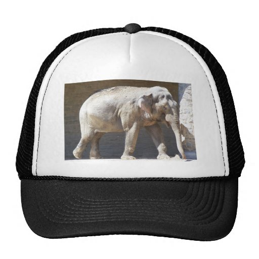 Elefante africano gorro