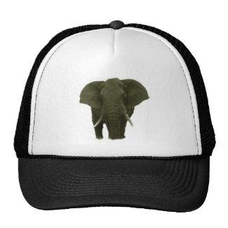 Elefante africano gorro de camionero