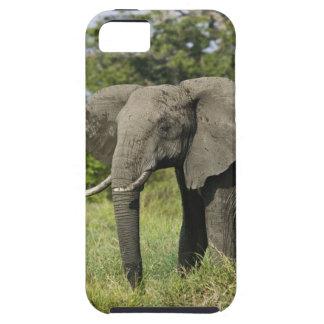 Elefante africano, Masai Mara, Kenia. Loxodonta iPhone 5 Cárcasa