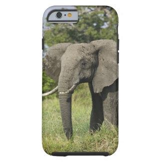 Elefante africano, Masai Mara, Kenia. Loxodonta Funda De iPhone 6 Tough