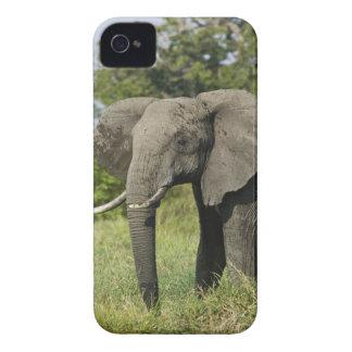 Elefante africano, Masai Mara, Kenia. Loxodonta Case-Mate iPhone 4 Cárcasa