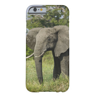 Elefante africano, Masai Mara, Kenia. Loxodonta Funda De iPhone 6 Barely There
