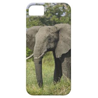 Elefante africano, Masai Mara, Kenia. Loxodonta iPhone 5 Cobertura