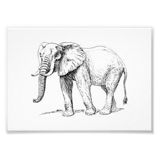Elefante africano impresión fotográfica