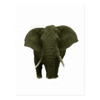 Elefante africano postales