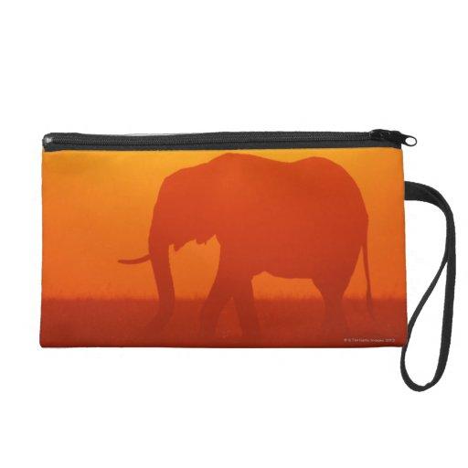 Elefante africano que camina en la puesta del sol,