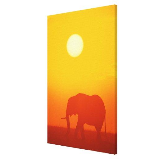 Elefante africano que camina en la puesta del sol, impresión en tela