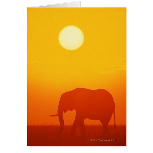 Elefante africano que camina en la puesta del sol, tarjeton