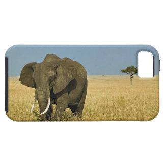 Elefante africano que pasta en hierba alta del ver iPhone 5 fundas