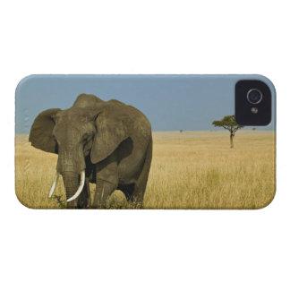 Elefante africano que pasta en hierba alta del ver iPhone 4 carcasas