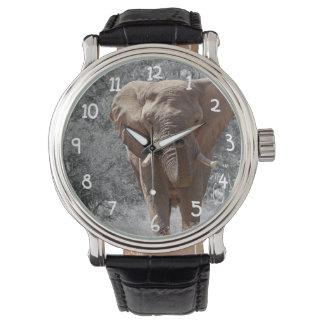 Elefante africano relojes de mano