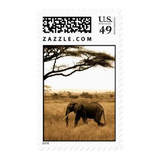 Elefante africano franqueo