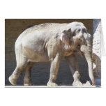 Elefante africano tarjeta