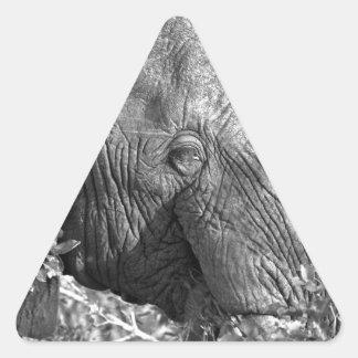 Elefante africano viejo pegatina triangular