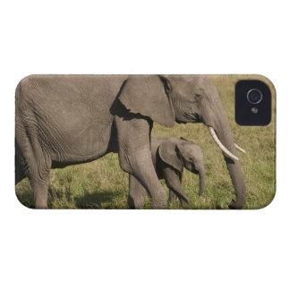 Elefante africano y cachorro (africana del Loxodon iPhone 4 Case-Mate Carcasa