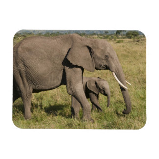 Elefante africano y cachorro (africana del Loxodon Imán