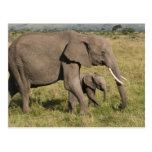 Elefante africano y cachorro (africana del Loxodon Postal