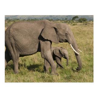 Elefante africano y cachorro (africana del tarjetas postales