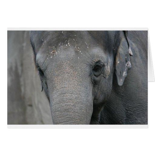 Elefante asiático con la frente del serrín felicitaciones