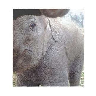 Elefante asiático del bebé en Chitwan, Nepal Blocs