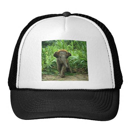 Elefante asiático del bebé gorra