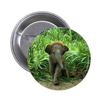 Elefante asiático del bebé pin