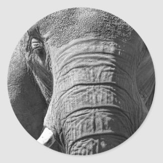 Elefante asiático en blanco y negro