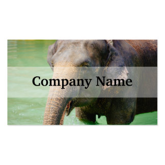Elefante asiático en el agua verde, foto animal plantilla de tarjeta personal