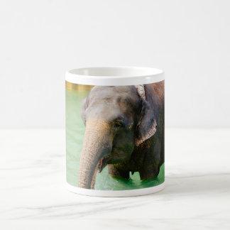 Elefante asiático en el agua verde, foto animal taza