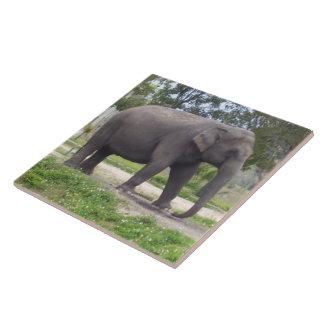 Elefante asiático femenino azulejo cuadrado grande