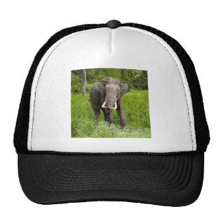 Elefante asiático gorras de camionero