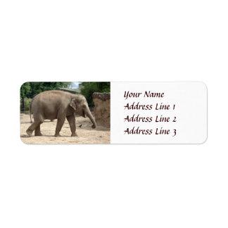 Elefante asiático que camina en el remite de la etiquetas de remite