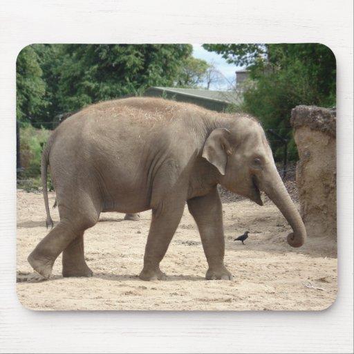 Elefante asiático que camina en la arena Mousepad Alfombrilla De Ratones