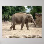 Elefante asiático que camina en la arena para rega poster