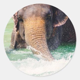 Elefante asiático que salpica en el agua, animal pegatina redonda
