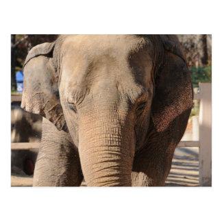 Elefante asiático postal
