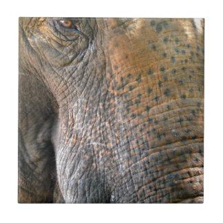 Elefante Azulejos