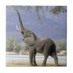 elefante azulejos cerámicos