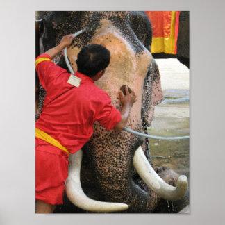 Elefante Bathtime… Ayutthaya, Tailandia Póster