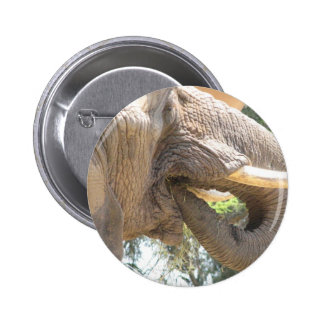 Elefante con el botón de los colmillos pin redondo de 2 pulgadas