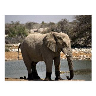 Elefante con los calcetines del fango postales