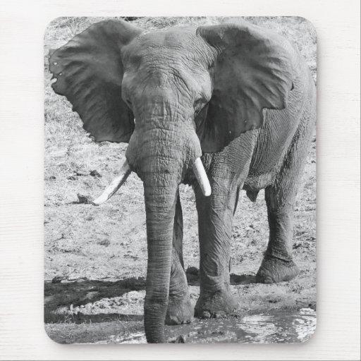 elefante de África blanco y negro Tapetes De Ratón