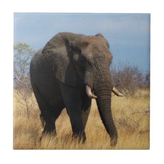 Elefante de Africian Azulejo Cuadrado Pequeño
