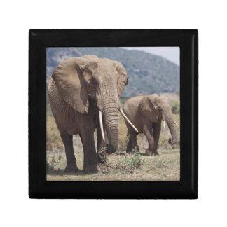 Elefante de la madre que camina con el becerro del joyero cuadrado pequeño