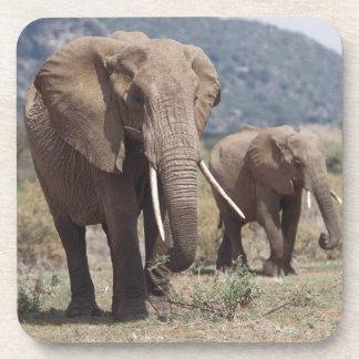 Elefante de la madre que camina con el becerro del posavaso