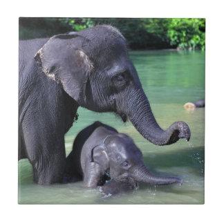 Elefante de la madre y del bebé en el río azulejo cuadrado pequeño