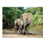Elefante de la madre y del bebé postal