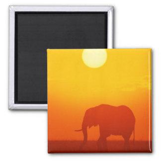 Elefante de la puesta del sol imanes