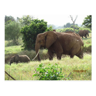 Elefante de Mother&Son Tarjetas Postales