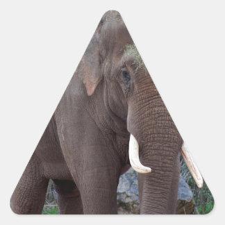 Elefante de toro masculino pegatina triangular